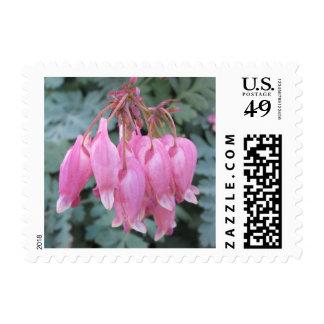 Bleeding Heart Pink Close Stamps