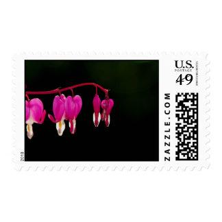 Bleeding-heart Postage Stamps