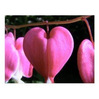 bleeding heart post card