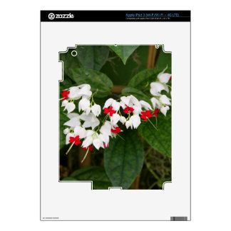 Bleeding Heart VIne iPad 3 Skin