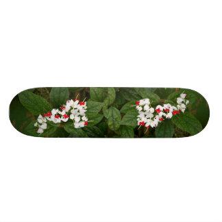 Bleeding Heart Vine Skateboard
