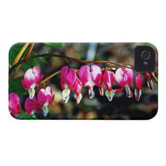 Bleeding Hearts Flowers iPhone 4 Covers