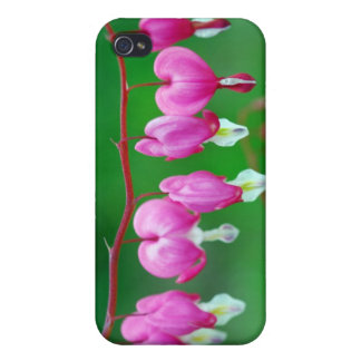 Bleeding Hearts iPhone Case Case For iPhone 4