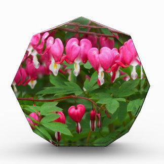 Bleeding Hearts Nature, Photo Acrylic Award