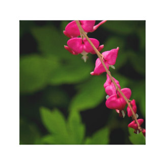 """""""Bleeding Hearts"""" photograph by Shawn M. Tomlinson Gallery Wrapped Canvas"""