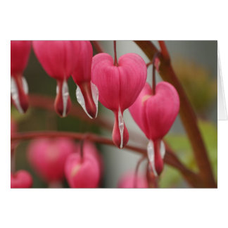 Bleeding Hearts Picture Cards