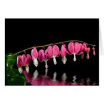 Bleeding Hearts reflected in water Card