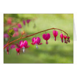 Bleeding Hearts Stationery Note Card