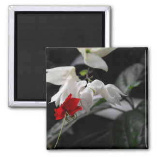 Bleeding Heartwine Flower 2 Inch Square Magnet