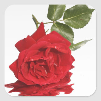 Bleeding Rose Square Stickers