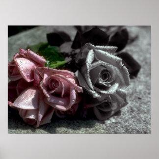 Blended roses, black, white & color poster