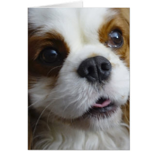Blenheim Cavalier King Charles Blank Note Card