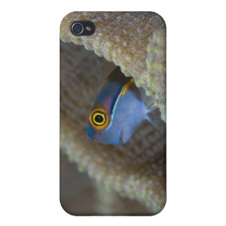 Blenny fish Blenniidae poking it s head out iPhone 4 Case
