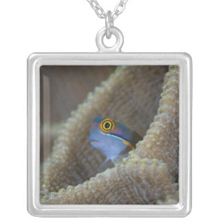 Blenny fish Blenniidae) poking it's head out Silver Plated Necklace