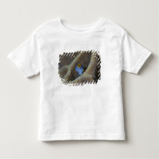 Blenny fish Blenniidae) poking it's head out Toddler T-shirt
