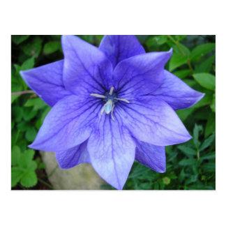 Bleue de Fleur Postales
