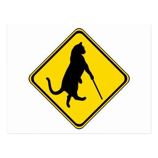 Blind Cats Crossing ! Post Card