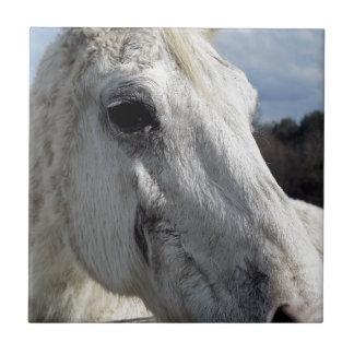 Blind Horse Ceramic Tile