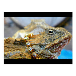 Bling… Bling… ahora que es un lagarto real… Tarjeta Postal