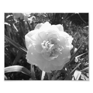 Blissful Black and White Daffodil Photo Print