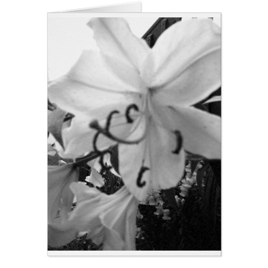 blk and wht lily card