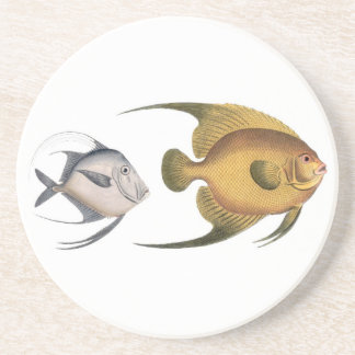 Bloch angelfish coaster