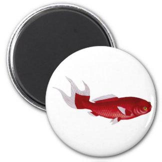 Bloch goldfish magnet