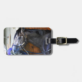 Blofeld - Todd Pletcher Roan Thoroughbred Luggage Tag