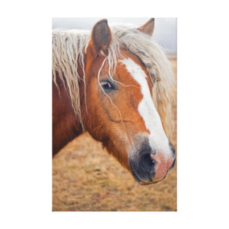 Blond Horse Stretched Canvas Print