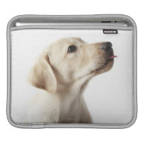 Blond Labrador puppy sticking out tongue iPad Sleeve