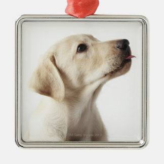 Blond Labrador puppy sticking out tongue Metal Ornament