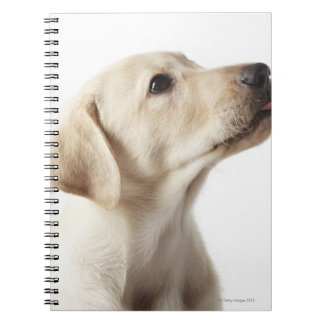 Blond Labrador puppy sticking out tongue Note Book