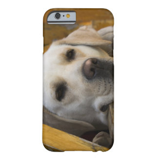 Blond Labrador retriever, Patagonia, Chile Barely There iPhone 6 Case