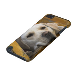 Blond Labrador retriever, Patagonia, Chile iPod Touch 5G Case