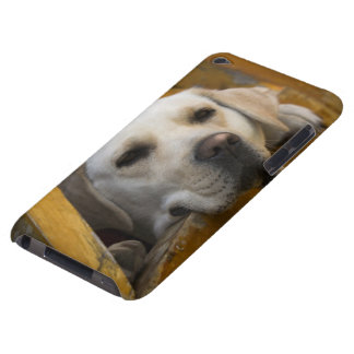 Blond Labrador retriever, Patagonia, Chile iPod Touch Case-Mate Case