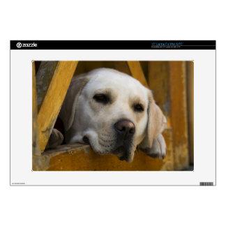 "Blond Labrador retriever, Patagonia, Chile Skin For 15"" Laptop"