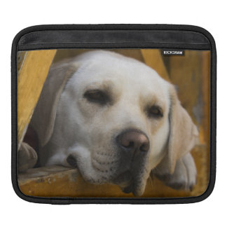 Blond Labrador retriever, Patagonia, Chile Sleeve For iPads