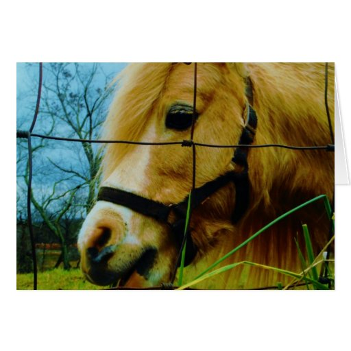 Blond Miniature Pony / Horse Blue Sky Greeting Card