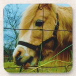 Blond Miniature Pony / Horse Blue Sky Drink Coasters