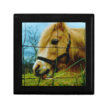 Blond Miniature Pony / Horse Blue Sky Jewelry Boxes