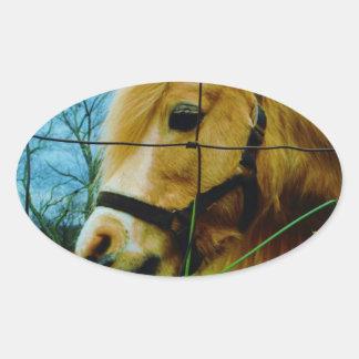 Blond Miniature Pony / Horse Blue Sky Oval Sticker