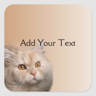 Blonde Cat with Topaz Eyes on Cinnamon Border Square Sticker