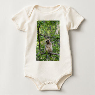 Blonde Gibbon Monkey - Hylobates lar Baby Creeper