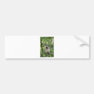 Blonde Gibbon Monkey - Hylobates lar Bumper Sticker