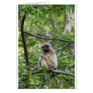 Blonde Gibbon Monkey - Hylobates lar Card