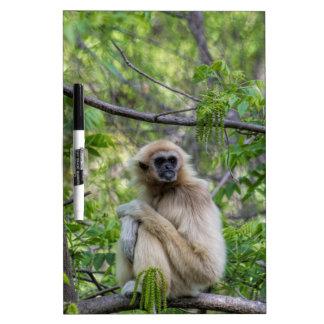Blonde Gibbon Monkey - Hylobates lar Dry-Erase Whiteboard
