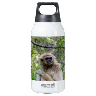 Blonde Gibbon Monkey - Hylobates lar Insulated Water Bottle