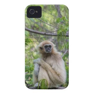 Blonde Gibbon Monkey - Hylobates lar iPhone 4 Cover