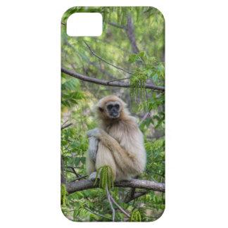 Blonde Gibbon Monkey - Hylobates lar iPhone SE/5/5s Case