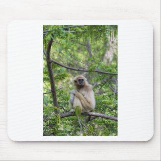 Blonde Gibbon Monkey - Hylobates lar Mouse Pad